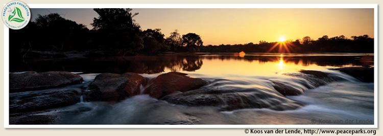 Bush Babies sunset river